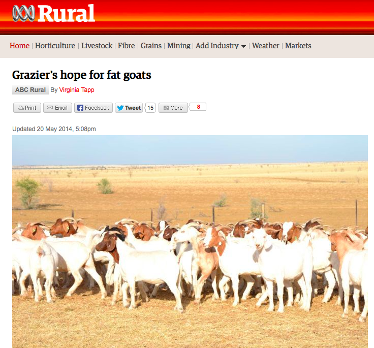 Grazier's hope for fat goats