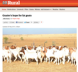 Grazier's hope for fat goats