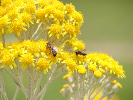 Xochitla bees