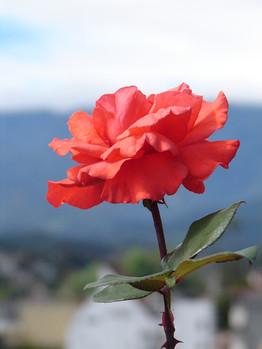 Xalapa Flower
