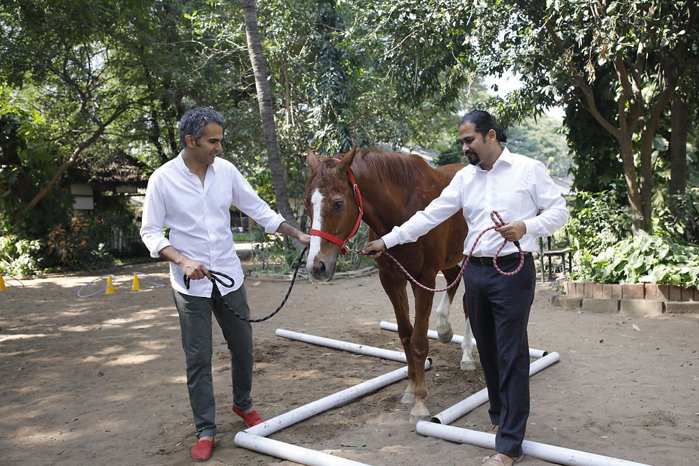 Leadership, horse, management training, workshop, chennai workshop, soft skills, bangalore, mumbai, horses, corporate training, outbound training, innovative workshop, learning, nature, teamwork, boss, manager, horse assisted leadership, india, learning with horses