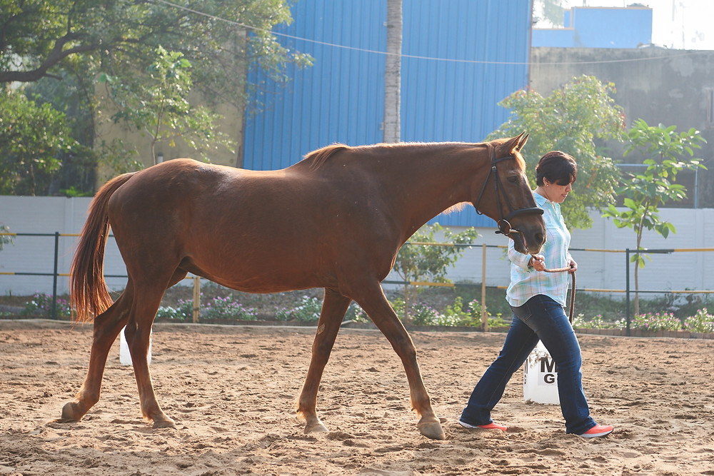 HQ Leadership India - Training with Horses - Manager Training India - Effective Leadership with Horses - HorseDream - Horse Leadership