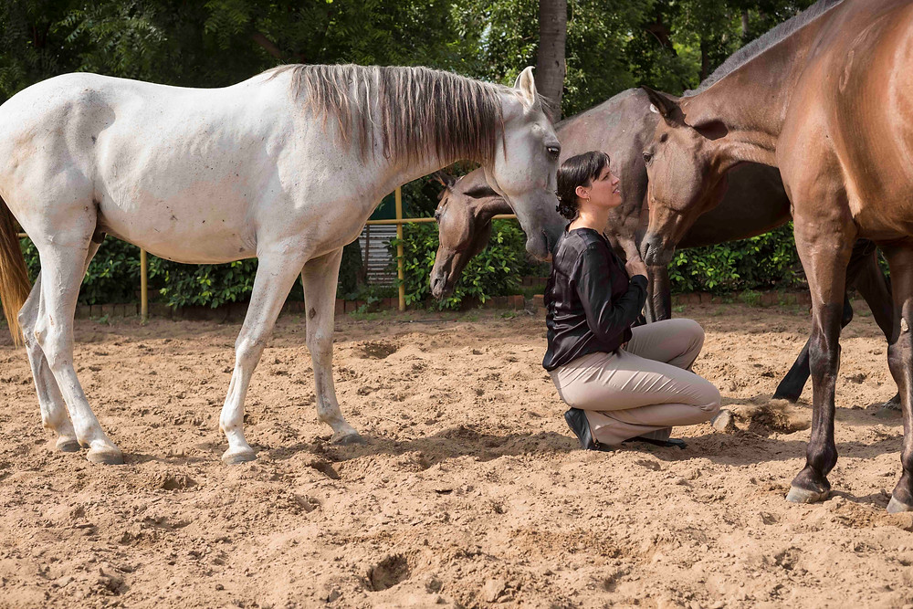Horse Whisperer's in Business, Corporate Leadership Training with Horses