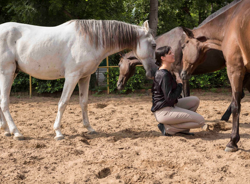 Horse Whisperers in Business