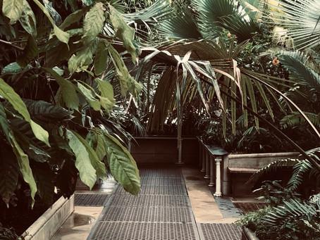 Botanical Expedition to Royal Kew