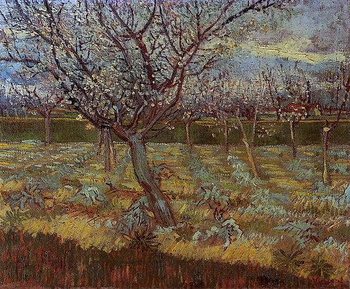 """""""Apricot tree in bloom"""" by Van Gogh"""