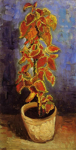 """Coleus Plant in a Flower Pot"" by Van Gogh"