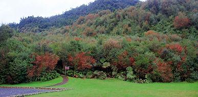Parque Pumalin - Chaiten