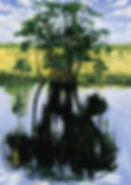 Cypress1989hr.jpg