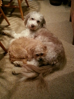 Bode And Cooper