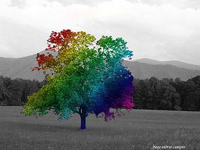 дърво на дъгата.jpg