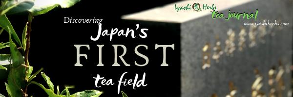 Japan first tea field header