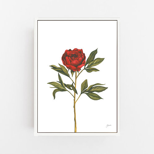 Single Peony in Deep Red Maroon Burgundy Living Art | CANVAS