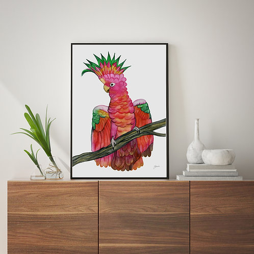 Miranda the Colourful Cockatoo Fine Art Print   FRAMED