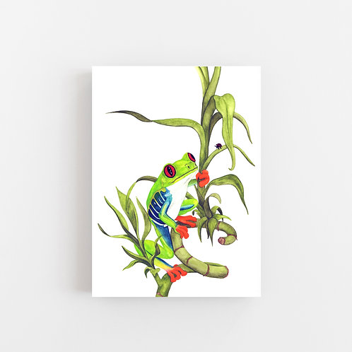 Archie the Red-Eyed Green Tree Frog Wall Art   CANVAS