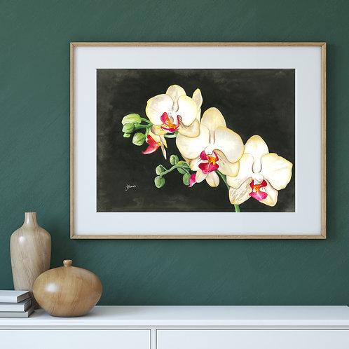 Orchid Black Living Art Print