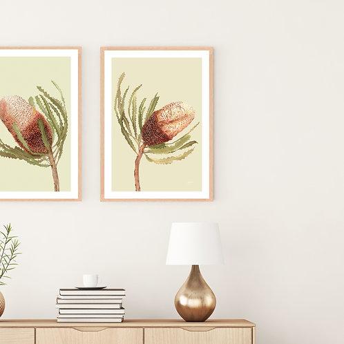 Banksia Native Living Art Flower 2 in Pale Sage Fine Art | FRAMED
