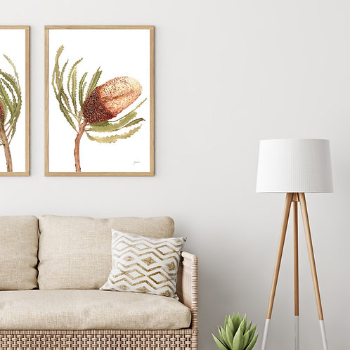 Banksia Native Living Art Flower 2 in White Fine Art | FRAMED