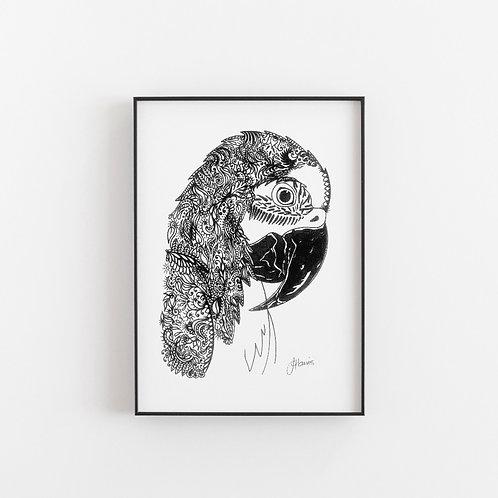 Bohemian Plume Macaw Parrot Print