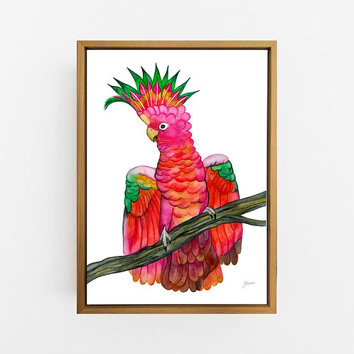 Miranda the Colourful Cockatoo Print Wall Art | CANVAS