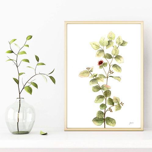 Eucalyptus Native Living Art 2 in White Art Print