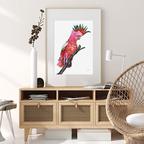 Mardi the Colourful Cockatoo Print