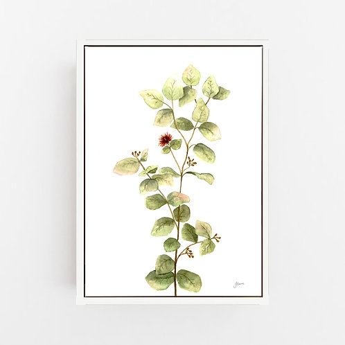 Eucalyptus Native Living Art 2 in White Art Print | CANVAS