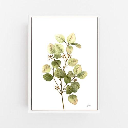 Eucalyptus Native Living Art 1 in White Art Print | CANVAS