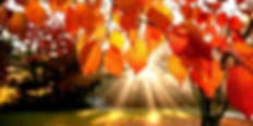 naturo-automne-nanaturopathe.jpg