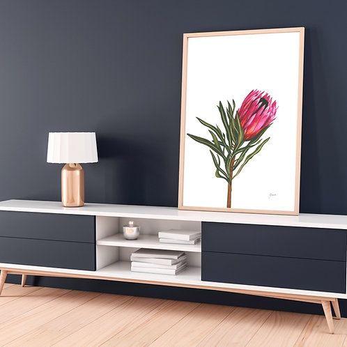 Protea 2 Living Art Print