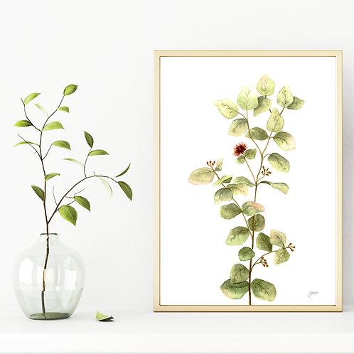 Eucalyptus Native Living Art 2 in White Wall Art | FRAMED