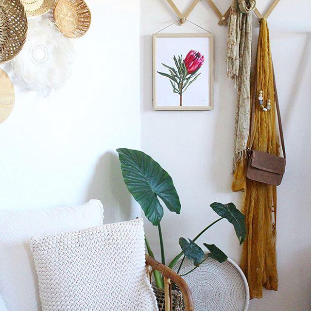 Protea 2 Living Art Print