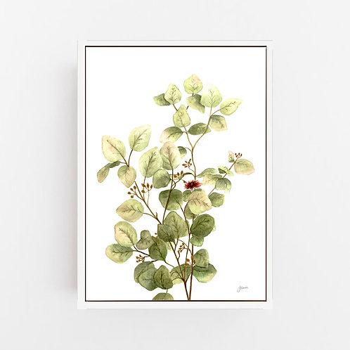 Eucalyptus Native Living Art 3 in White Art Print | CANVAS
