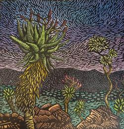 Aloe,: Three Tree Hill, 2020