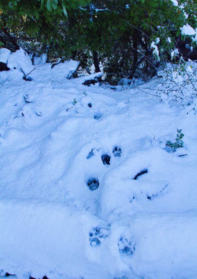F2's tracks in snow.jpg