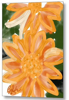 Orange Gerbers Metal Print