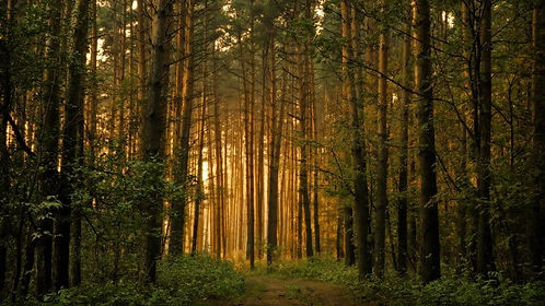 forest-trees-wallpaper-landscape-nature-