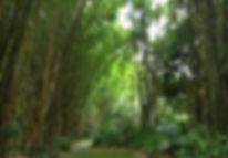 CR bamboo horiz.jpg