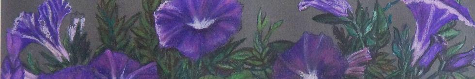 Вьюнки.2012. Б., пастель.  39,5х50.JPG