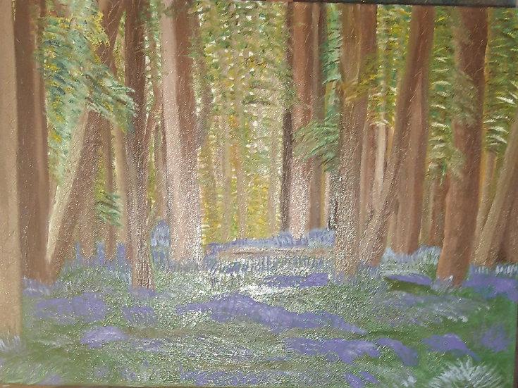 Bluebell Woods (d) Jan Drury