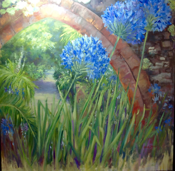 Agapanthus in the Abbey Gardens