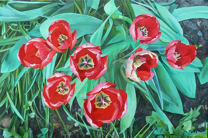 Cardington Tulips