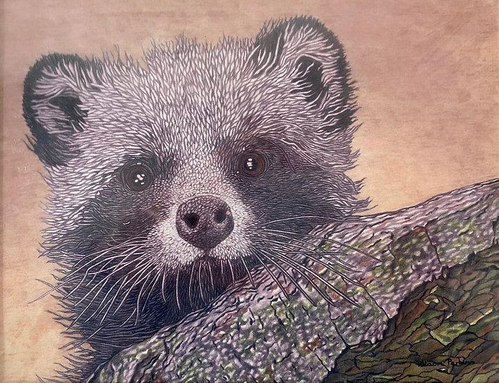 Alison Perkins Raccoon Dog