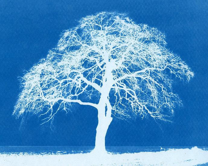 SINGLE TREE - DAVID BOND