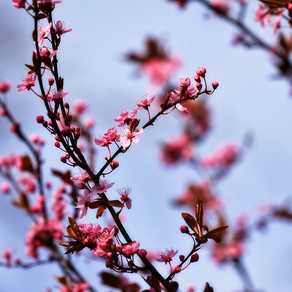 Spring is in the Air :)