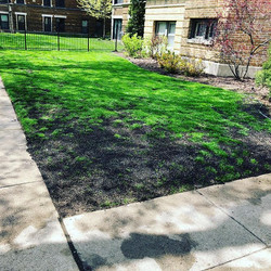 #lawncare #spring #seedandsoil #overseed