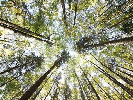 Förtjänar skog en plats i portföljen?