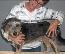 Canine Massage Course