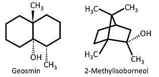 ジエオスミン構造式2