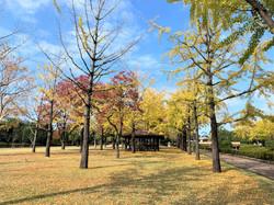 Central Park Large